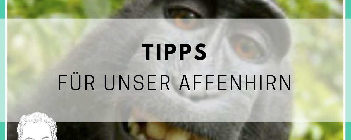 Gedanken Kontrollieren Wertvolle Tipps Fur Dein Affenhirn